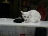 palun vaktsineerige mu hiir ära